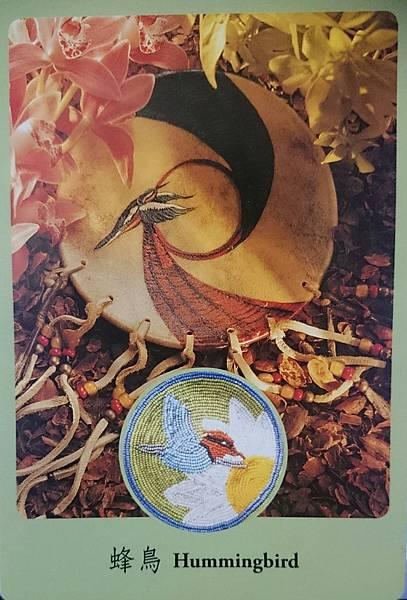 蜂鳥-Hummingbird
