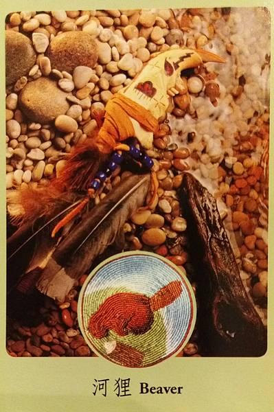 河狸-Beaver