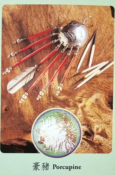 豪豬-Porcupine