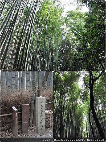 竹林之道02