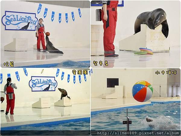 海豹表演02