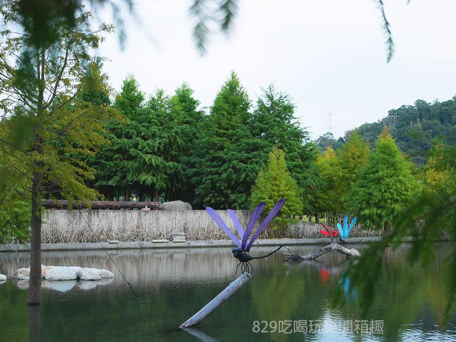 【台中后里區】泰安落羽松祕境重新開放了|新設置的打卡點怎麼拍都好美|季節限定的浪漫美景|中部約會IG網美拍照景點| (13).png