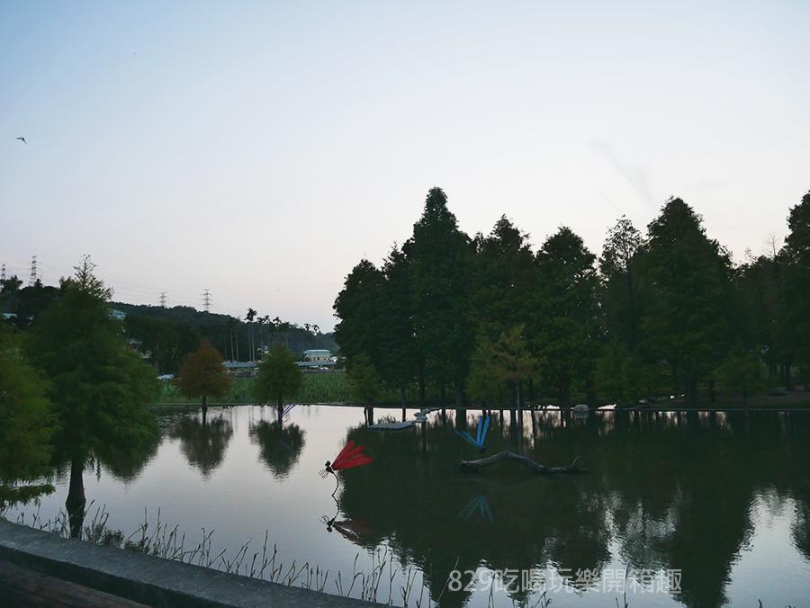 【台中后里區】泰安落羽松祕境重新開放了|新設置的打卡點怎麼拍都好美|季節限定的浪漫美景|中部約會IG網美拍照景點| (15).png