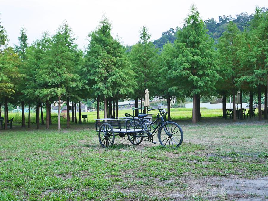 【台中后里區】泰安落羽松祕境重新開放了|新設置的打卡點怎麼拍都好美|季節限定的浪漫美景|中部約會IG網美拍照景點| (6).png