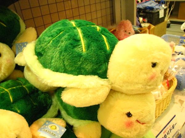 蠢丸的小龜