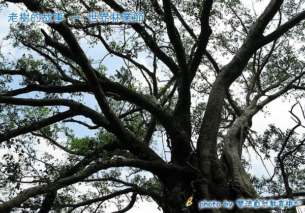 老樹的故事 — 世界林業節-套印模板.jpg