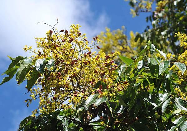 花和未成熟的果縮圖