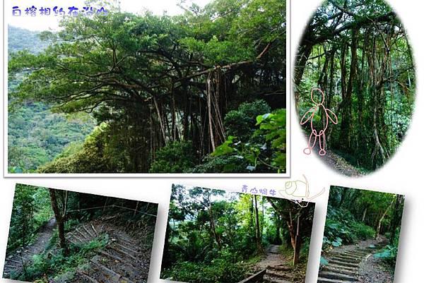 8沿山往森林教室的白榕