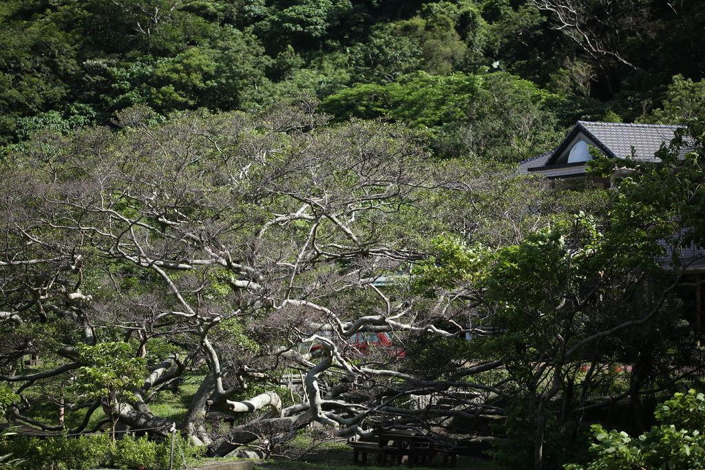 20150709 雙流 蓮花颱風過後