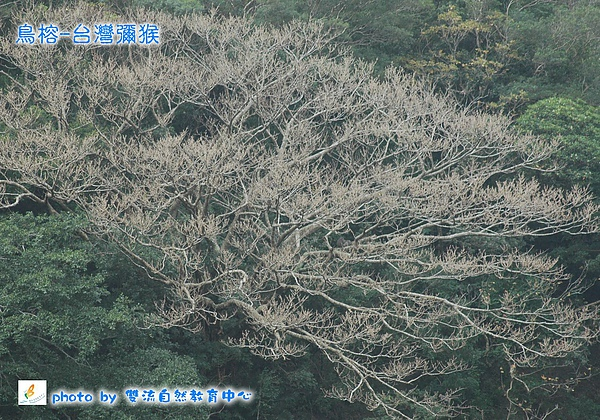 water鳥榕-台灣彌猴.jpg