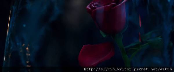 17玫瑰.jpg