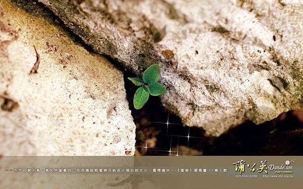 wallpaper_1108-C-01
