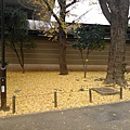 Day 2 - 上野公園 : 落葉