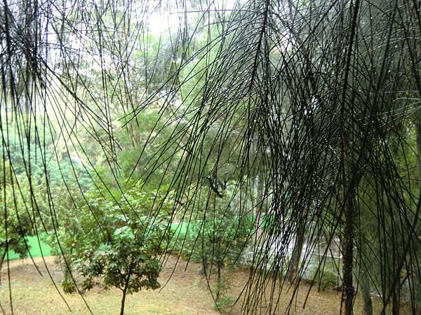 樹梢的晶瑩水珠
