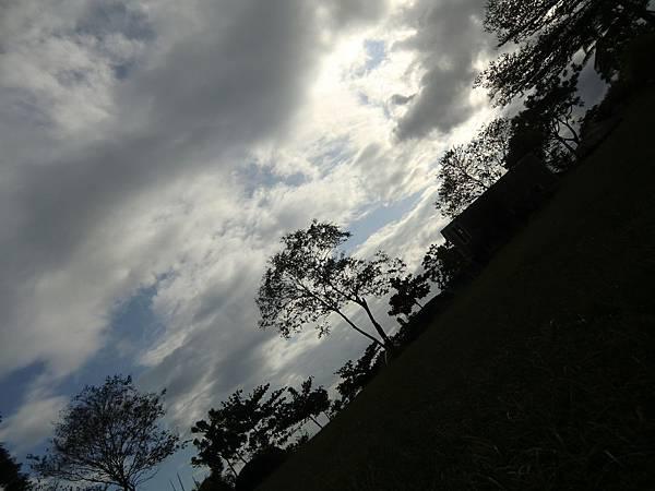 雲和樹 (2).JPG