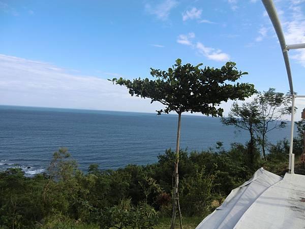 sea & tree (1).JPG