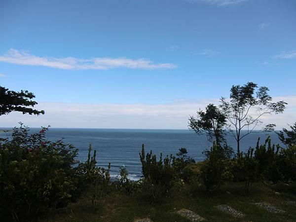 海與樹.JPG