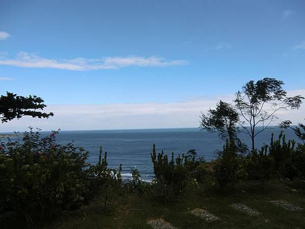 海與樹 (1).JPG