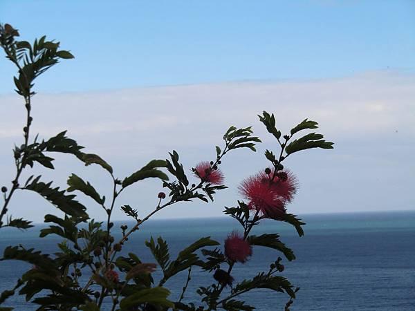 海與樹 (2).JPG