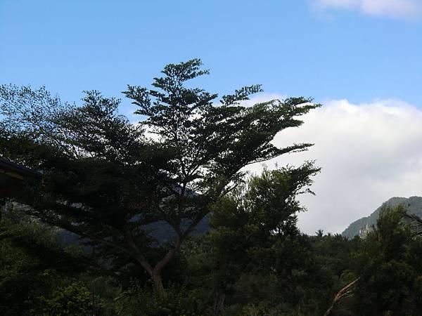 海與樹 (4).JPG