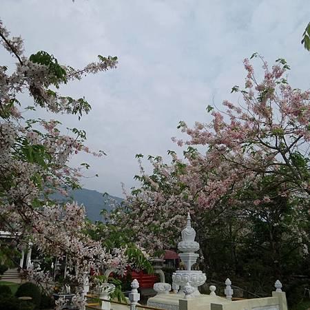 陣雨樹.jpg8.jpg
