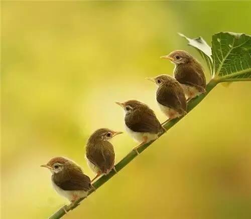1鳥.jpg