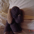 陪伴我成長的可愛小象