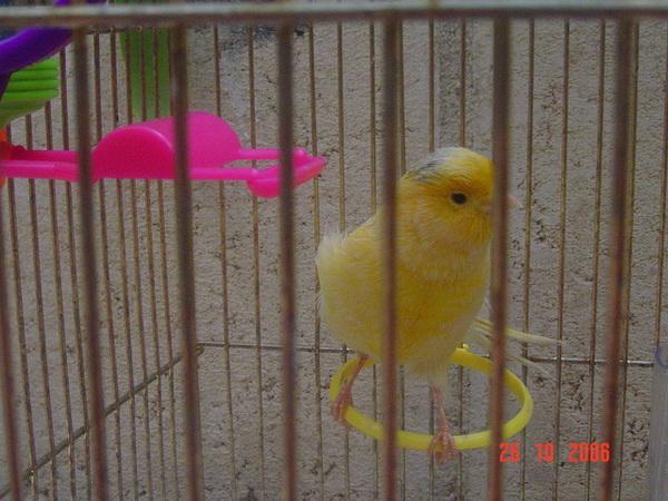 我家的笨鳥鳥   但我個人認為超可愛