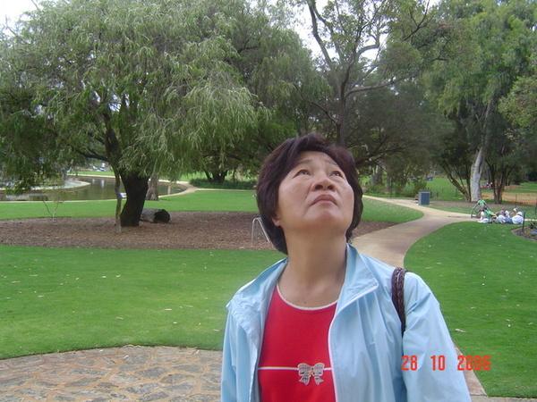 老媽 你看啥   看樹上的鳥ㄅ  哈哈