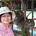 老媽和無尾熊