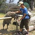 哥哥還在餵小綿羊