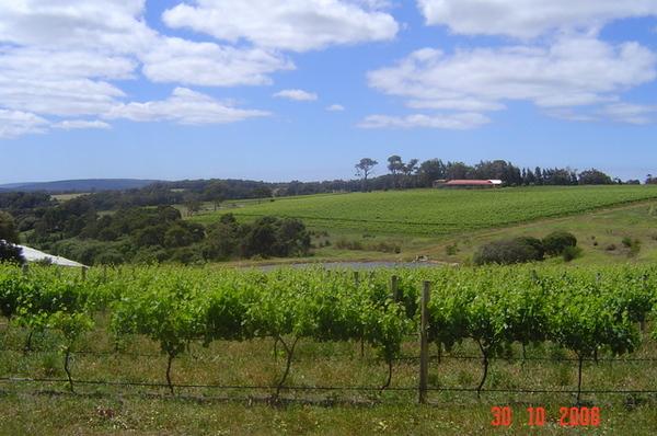 酒莊葡萄園一景