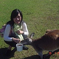 還是我和袋鼠..........餵食中