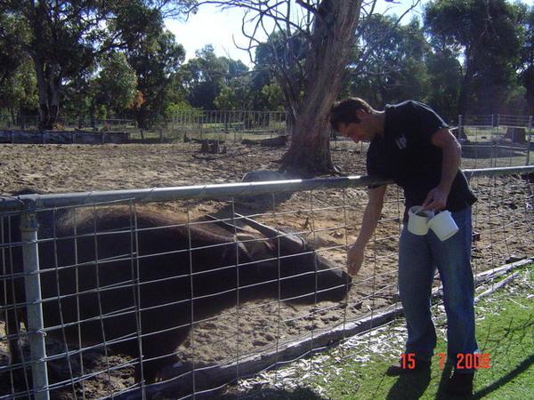 餵食中.......那隻動物應該是牛ㄅ