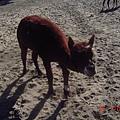 長的像鹿.....但我也不知道叫什麼動物