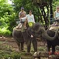哈哈哈哈   大象ㄟ