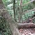 20080704-064 這個位置超好坐!看神木視野又棒!