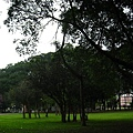 20100404-2-31 這些樹有小團體!