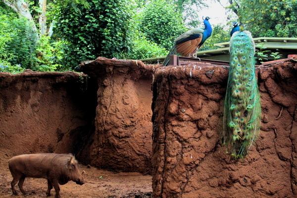 IMG_3078夏威夷動物園.jpg