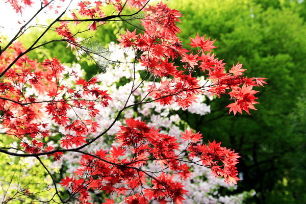 IMG_0563京都花與葉.jpg