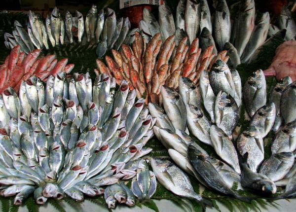 IMG_8321伊斯坦堡魚.jpg