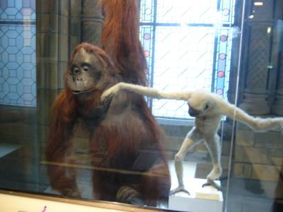 Monkey & orangutan