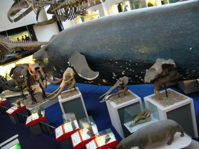 海洋動物館sea animail part