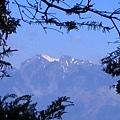 林間遠眺雪山