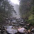 乾枯 卻充滿濕意的的老濃溪
