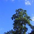 藍天也跟著露臉