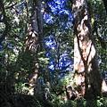 [東進新康十景] 雙胞巨木