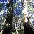 [東進新康十景] 東西衛門巨木