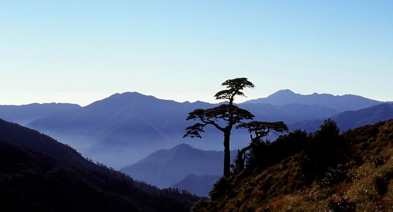 鐵杉 & 藍山