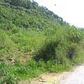 斷牆登山口 在路右後方